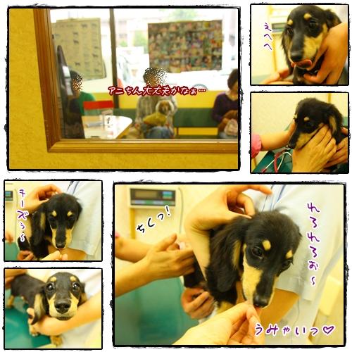 090529狂犬病予防注射