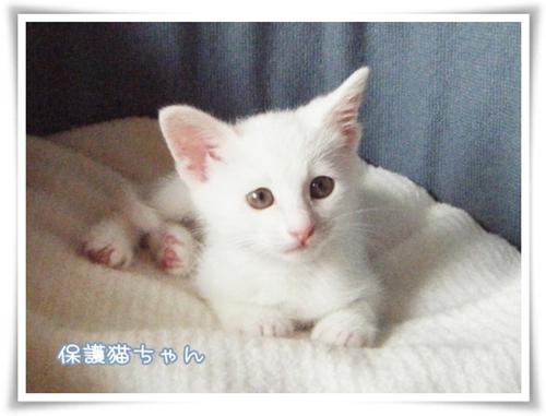 090611保護猫ちゃん
