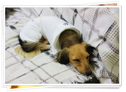 090813おやすみシナモン