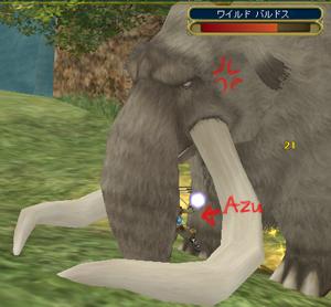 耳の大きくないゾウさんですw