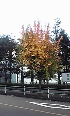 20081130230137.jpg