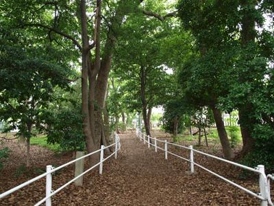 神社裏の林