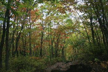 善五郎滝への道