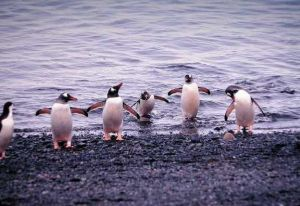 penguin0008.jpg