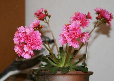 花盛り~(*^。^*)♪