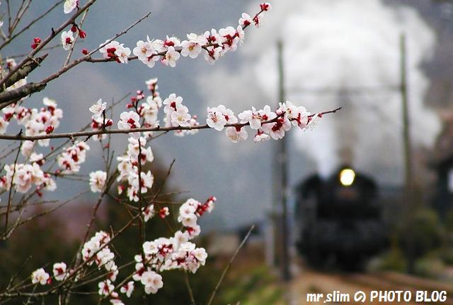 22-c11312-sakidaira-senzu.jpg