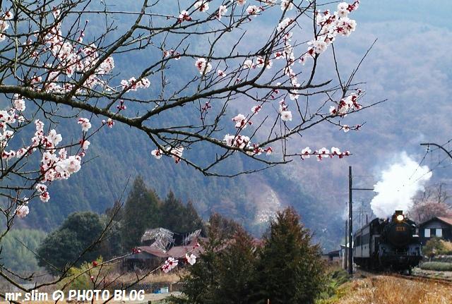 45-c108-sakidaira-senzu.jpg