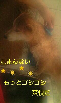 20081117ren1.jpg