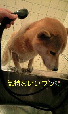 20081117ren2.jpg