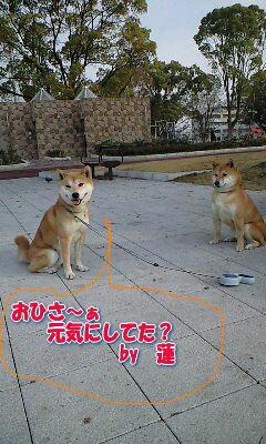 20081217ren2a.jpg