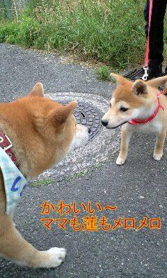 20090607sakura1.jpg