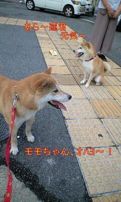 20090701ren.jpg