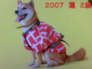 20090704ren1.jpg