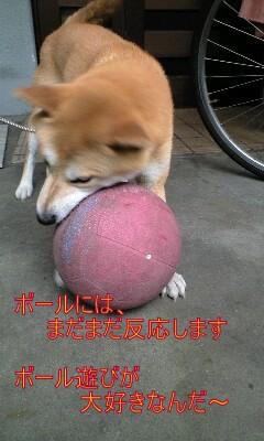 20090704ren2.jpg