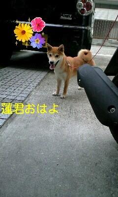20090724sakura.jpg