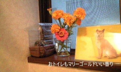 20090917hana2.jpg