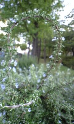 20091004niki3.jpg