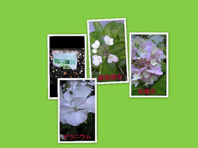 kazue2.jpg