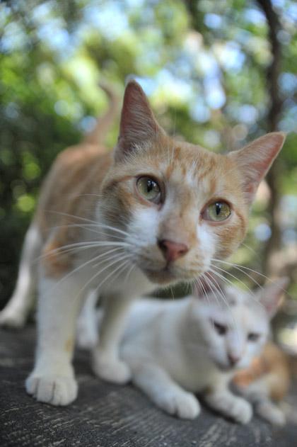 注目CATS