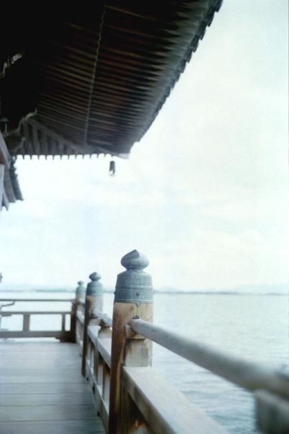 擬宝珠/湖上