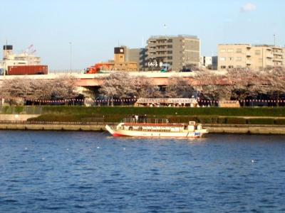 2008.桜と純米大吟醸 (4)