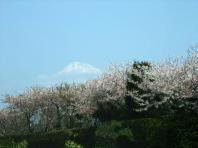 2008年 遠州の春 〔前編〕