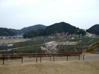 2008年 遠州の春 〔前編〕 (1)