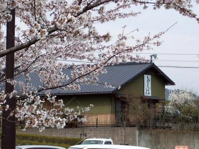 2008年 遠州の春 〔前編〕 (2)