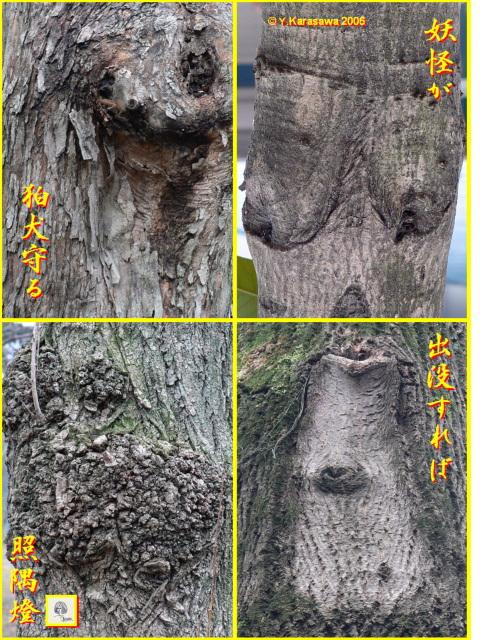 0206木々の顔12