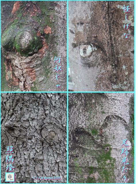 0209木々の顔13