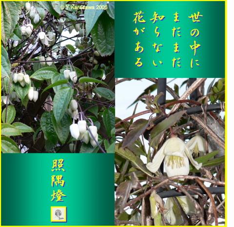 0325蔓性の白い花