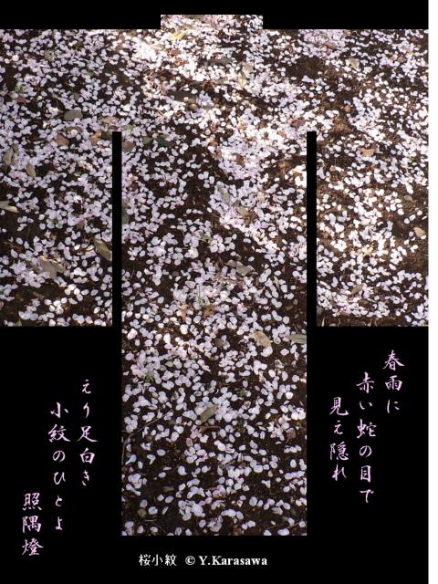 0409桜小紋