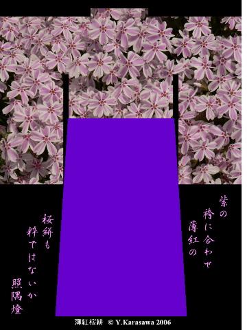 0523薄紅桜絣