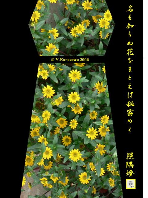 0706無名花ドレス