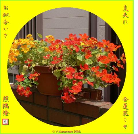 0906金蓮花