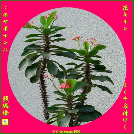 0908花キリン