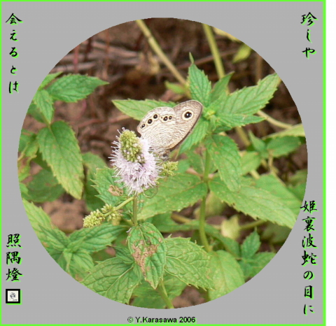 0911姫裏波蛇の目