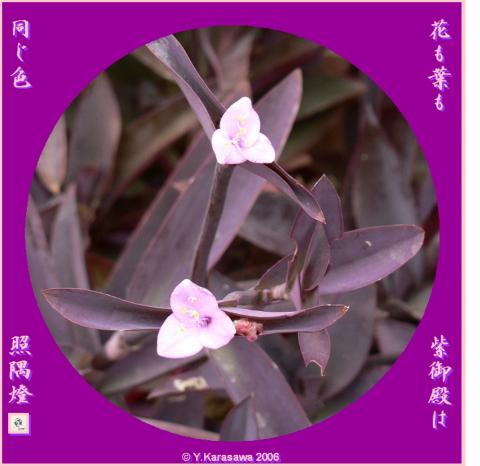 0915紫御殿