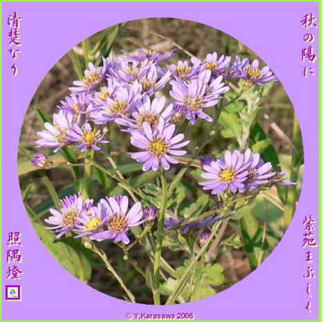 0920紫苑