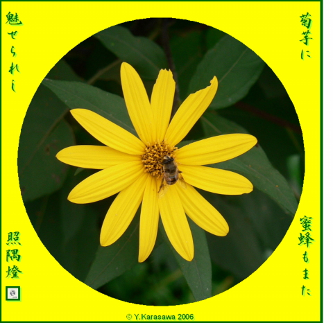 1017菊芋に蜜蜂