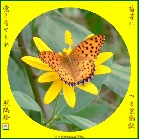 1020菊芋に豹紋