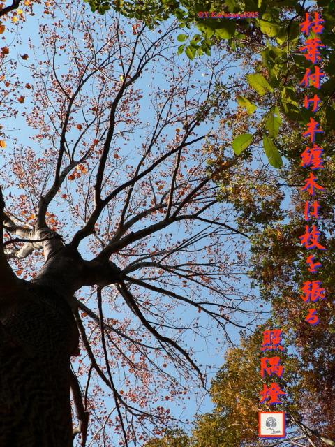 1130枯葉の半纏木