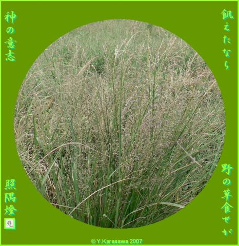 0217野の草