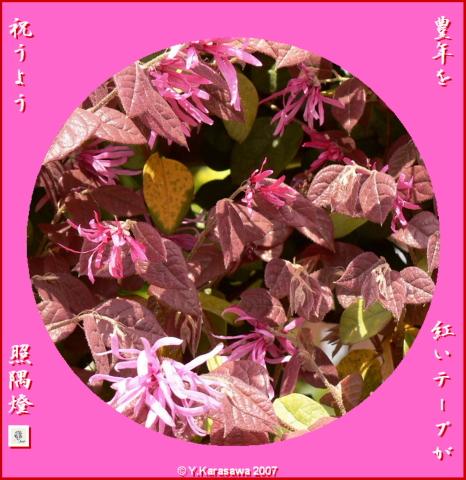 0321紅花常磐万作