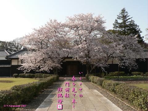 0328門前桜