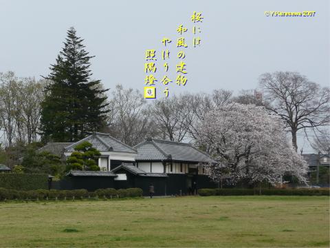0402旧吉田邸の桜