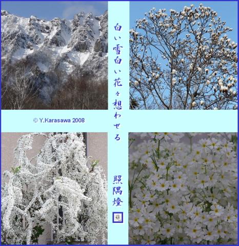 0124白雪白花