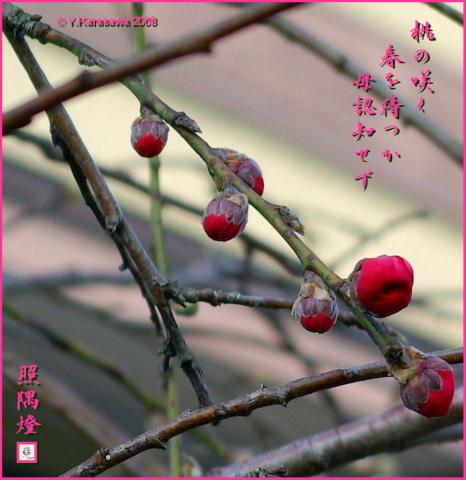 080303花桃
