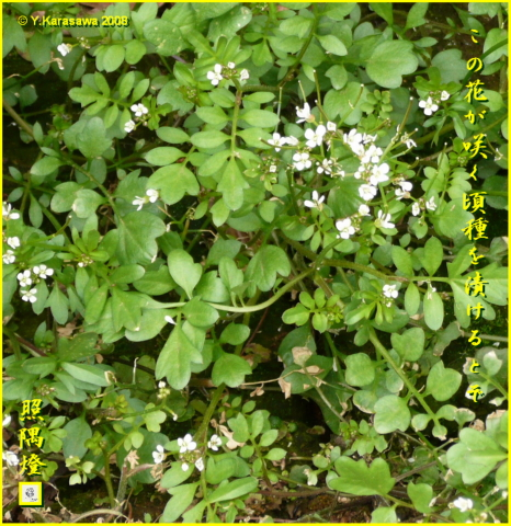 080307種漬花