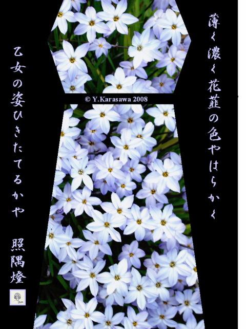 080325花韮ドレス
